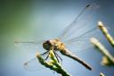 Dragonfly Macro Close-Up Photography