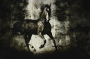 Galloping Horse on Dark Backround Texture
