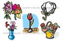 Bulbs Cotton Flora florists Flower Mini Pack
