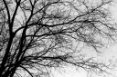 Tree Branches I