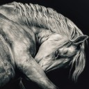 White Arabian Horse Head – Black and White art photography