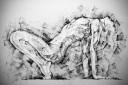 Woman glamour pose art drawing – woman body charcoal drawing