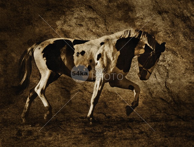 Beautiful Pinto Horse white trotting trot stallion powerfully power pony pinto nature muscular muscle monumental mare mane joy horses horse hair gallop energy brown beautiful 54ka StockPhoto