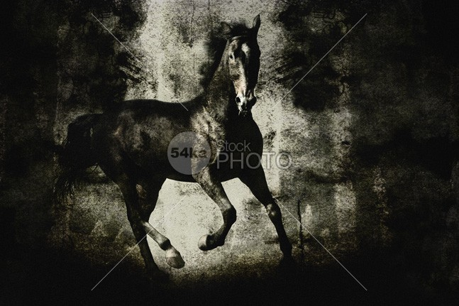 Galloping Horse on Dark Backround Texture wildlife Wild West wild west texture Tail Running outdoors One Animal nobody Motion horse horizontal Galloping fairytale Extreme dust Desert dark Chasing Black Horse black Beauty In Nature Backround Animals And Pets animals animal action 54ka StockPhoto