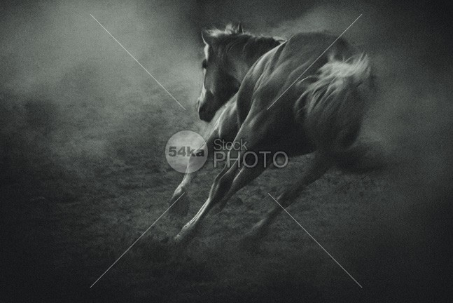 Horse in Morning Mist – Equine Beauty winter sunrise Silhouette scenic peaceful peace outdoor nature Morning mist mammal horse Fog fantasy equine dream domestic cloud catle blue background animal 54ka StockPhoto