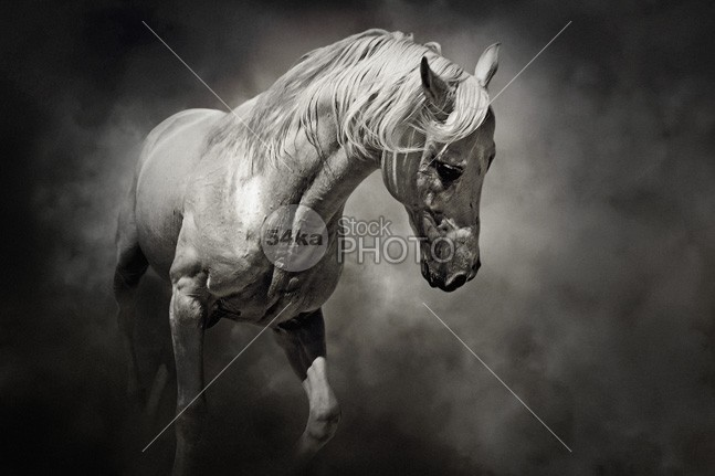 Sad White Horse – Black and White - Photography Equestrian ...