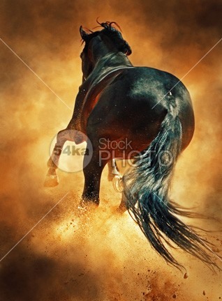 Galloping Horse in Dust Cloud young wild sunset sunrise sun Success strong stallion speed silver Silhouette Running run power outside orange one nature moving Motion mammal jump horse ground gallop freedom free fight fast equine equestrian dust domestic color brown beauty beautiful animal action 54ka StockPhoto