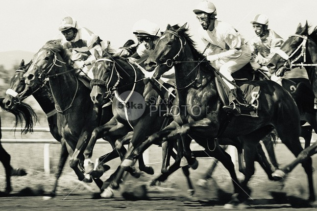 Horse racing – start gates for horse races venue track thoroughbred stallion sports sport speed sand Running Riding racing racehorse race outdoors nose nature monochrome Men Leadership Jockey image horseracing track horseracing horse head group gambling gamble horses flat Extreme event equine equestrian competition equestrian Determination competitive competition animal 54ka StockPhoto