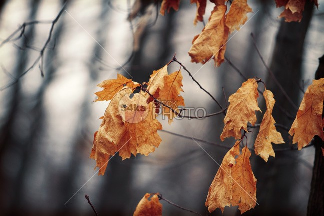 Autumn Leaves yellow white vibrant tree texture september seasonal season red plant pattern park organic orange october oak november nature natural maple leaf isolated green golden gold frame forest foliage flora fall environmental environment dry detail design Decoration cover colorful color closeup clean brown bright botanical border beauty beautiful background autumn abstract 54ka StockPhoto