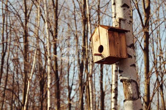 Bird House wooden wood winter wildlife wild white tree spring snow shelter seed seasonal season scene red pine peaceful park painted outdoor one nobody nest nature house home hole help green garden frost forest food feather environment ecology eating decorated colorful color cold closeup chickadee care box birdhouse bird beautiful autumn animal 54ka StockPhoto