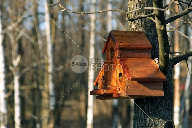 Special Birds House woods woodland wood view tree summer structure starling spring season roof residential pets person park outdoors one nobody nesting nest nature life leaf house homes hole hanging green gardens forest environmental environment ecosystem ecology ecological Buildings branch box birds birdhouse bird architectural animals 54ka StockPhoto