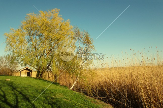 Tree and small house on beautiful lake in the autumn wooden wood water veranda Vacations vacation trees travel tranquil terrace summer sky shore serene scenery scene rural roof ripples resort residential remote Relaxation recreation pond picturesque outdoors outdoor nobody nature lush leisure landscape Lake Idyllic house holiday gangway forest floating exterior descriptive cottage camp building beauty beautiful balcony architecture 54ka StockPhoto