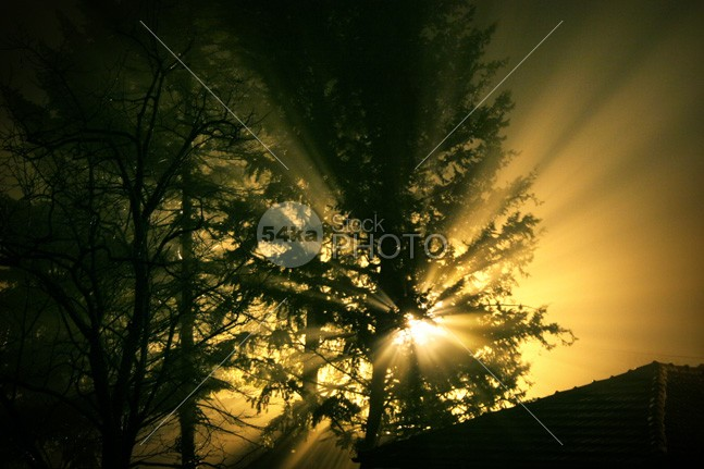 Warm light in fog a dark tree in autumn warm trees tree street rays peaceful night nature Morning moon misty mist light rays light leaves landscape journey ghostly ghost Foggy Fog fall daybreak dark burst branches background autumn apparition alone 54ka StockPhoto