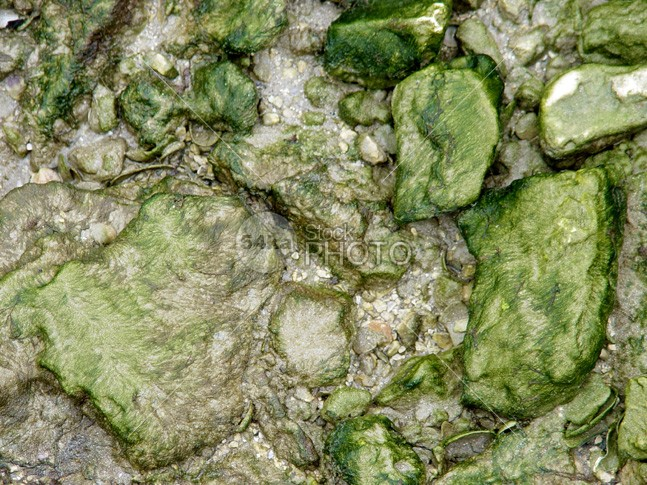 Sea stone water algae texture wet waterstone water vivid vacation tide texture stone shore shells seaweed seawater seaside seashore seascape seacoast sea scenery sandgate rocky rock reef plant overhead outdoors ocean nature natural mossy moss marine low growth group green fresh flora environment detail color Coastline coastal coast cliff beautiful background aquatic algae alga 54ka StockPhoto