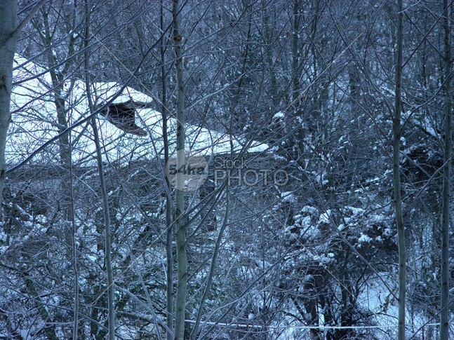 House in the forest winter landscape xmas wooden wood wintry winter window white weather tree travel traditional snowy snow sky seasonal season scenic scenery scene rural roof Relaxation quiet peaceful outdoor nature light landscape in forest house home holiday frosty frost forest exterior day cozy covered country cottage cold christmas chalet building blue beautiful architecture 54ka StockPhoto