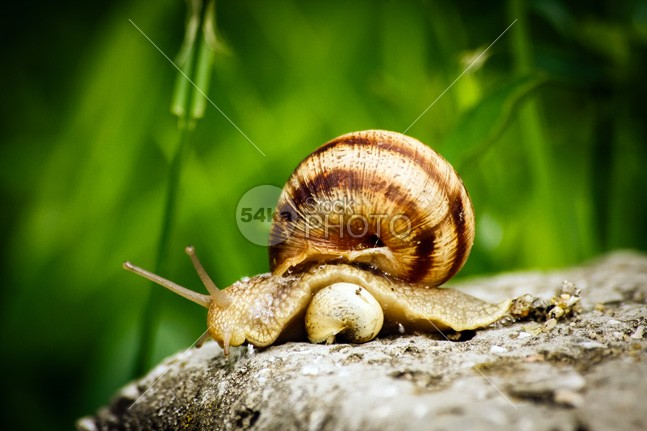 Snail warm summer snail parent outdoors new nature macro home green grass generation garden future protection Family close care background a small snail 54ka StockPhoto