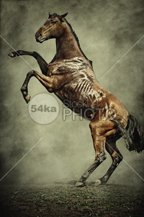 A Beautiful Horse Standing On Two Legs wild Style strong Standing stand stallion rural power photo peaceful outdoor nice nature natural Motion mare mane mammal legs Leg illustration horses horse green grass freedom free fantasy equine equestrian elegance domestic cute color Cheerful brown beauty beautiful animal 54ka StockPhoto