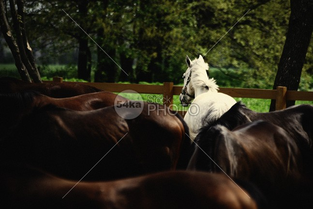 Calm horses white horse white trees tranquil sunlight summer sky Silhouette season scenic scenery rural quiet peaceful pasture pastoral outside outdoors nature natural Morning moody misty meadow mare lone light landscape horse haze gelding field farmland equine equestrian photography early Dawn countryside country calm horses calm black and white beauty beautiful background animal 54ka StockPhoto