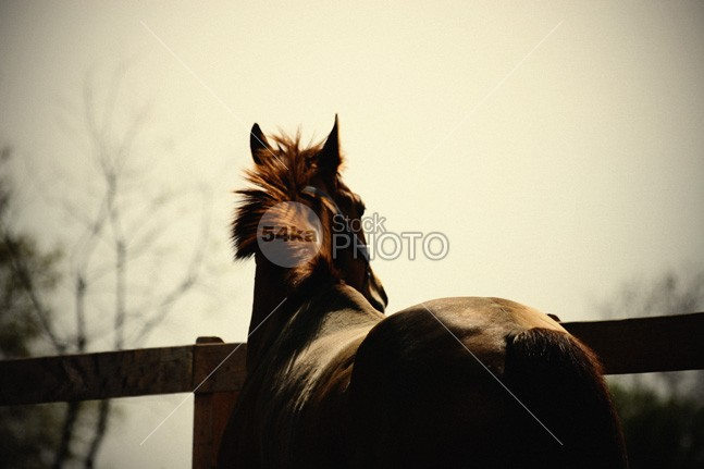 Calm horse on the sunset yellow wildlife wild west tale sunset sunrise sun summer Standing stallion space Silhouette Running ranch People panorama outdoor nature meadow mane man mammal lone light landscape horse hoofed freedom free field farm equine equestrian emotions colorful color chestnut calm bright background animal alone 54ka StockPhoto