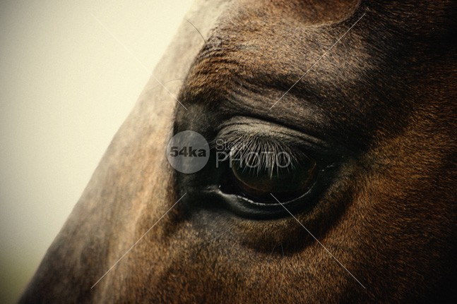 Sadness horse eye vision view treat stud stare stallion soul sight sense Sadness Sad pony portrait sad face sad portrait pony open mare mane mammal look lonely loneliness horse head horse hair horse eye horse honesty honest head Harness foal feel eye equine portrait equestrian emotion emotion detail brown breed body background animal 54ka StockPhoto