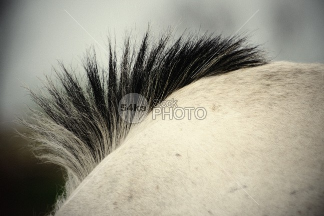 Horse mane wildlife white vivid vision sunlight summer stallion stable side view sense rural portrait pet outdoors nature mane mammal macro look light brown light lateral landscape format horse fur horse horizontally horizontal format horizontal head hair fur filly equitation equine equestrian domestic details detail day color closeup close-up brown breed beauty beautiful background animal 54ka StockPhoto