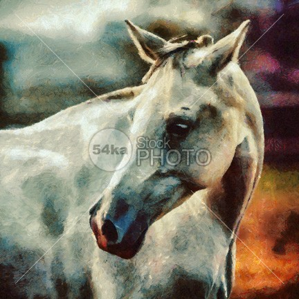 Lonely white horse Painting painting outside orange october nature Morning meadow mare mane Mammals mammal Looking At Camera lonely landscape format landscape horse horizontal format home head grey greenery grassland grass gelding Foggy Fog field farmland farm eye contact eye europe equine photography equine equestrian photo equestrian beauty drawing domesticated Dawn countryside country Copy Space color cloud britain beauty beautiful autumn atmosphere Art animal alone 54ka StockPhoto