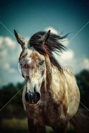 Beautiful and Lonely Horse Art Photography Vintage Color photo orange nature Morning meadow mare mane Mammals mammal Looking At Camera lonely white horse lonely landscape format landscape horse horizontal format home head grey greenery grassland grass gelding Foggy Fog field farmland farm eye contact eye europe equine photography equine equestrian photo equestrian beauty domesticated Dawn countryside country Copy Space color cloud britain beauty beautiful autumn atmosphere Art animal alone 54ka StockPhoto