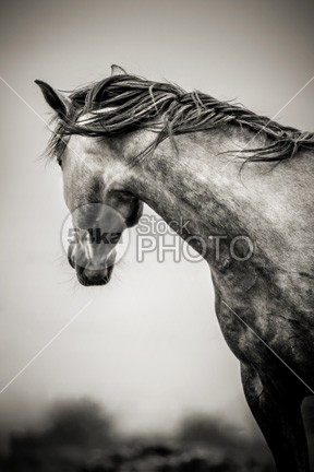 The Lonely Horse ride ranch rain pretty pony pferde pattern pasture outdoors one off nobody nature meadow lonely iceland horseshoe horses horse His green grazing grass frozen form forest forage field farming farmer farm exquisite equine economy eating domestic details cute countryside color close chestnut breeding black beauty beautiful bay background animals animal and abstract 54ka StockPhoto