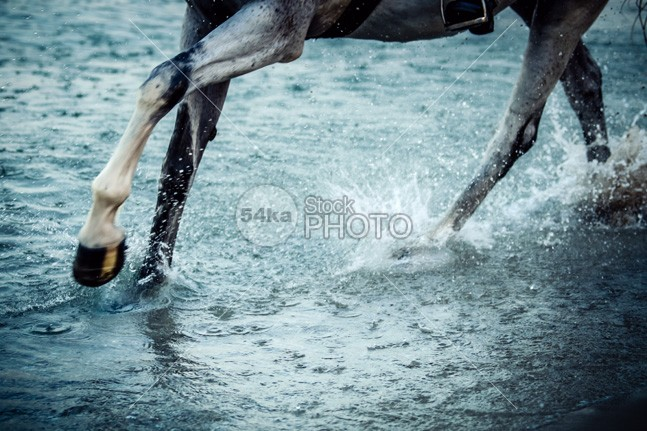 Horse legs running on the water peeking paddok paddock outdoors out one object nobody next nature muzzle Motion mammal Male looking livestock little Lips legs horseshoes horseshoe horses horse hoofs His head gray grass field fence female farm eye equestrian beauty eating drops domestic diamond colored clean brown body blue blaze black beautiful background Art animals animal action 54ka StockPhoto