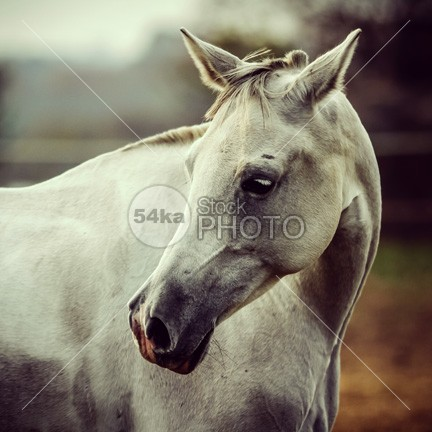 White Horse Close Up Vintage Colors Portrait outside orange old october nature Morning meadow mare mane Mammals mammal Looking At Camera lonely landscape format landscape horse horizontal format home head grey greenery grassland grass gelding Foggy Fog field farmland farm eye contact eye europe equine photography equine equestrian photo equestrian beauty domesticated Dawn countryside country Copy Space color cloud britain beauty beautiful autumn atmosphere Art animal alone 54ka StockPhoto