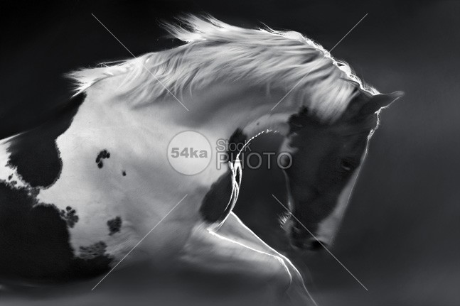 My Lovely Horse moving movement motion blur meadow mare mammal landscape indiana image horses horse photography horse head happy hair green grass gallop freedom field female fast fantasy equine equestrian beauty equestrian emotions ear domestic cute countryside country colourful color clams brown bridle blue beauty beautiful paint horse beautiful attractive animals animal American amazing stallion alone adorable active action 54ka StockPhoto