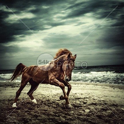 Brown horse galloping on the coastline hot horses horse water horse horizontal horizon hoof happy Galloping gallop freedom free force foal filly evening equitation equine equestrian energy emotions emotion dust dramatic domestic Desert day dark Coastline cloudy clouds clear canter brown bright breed blue black beauty beautiful beast beach bay background animals animal allure air Activity active action 54ka StockPhoto