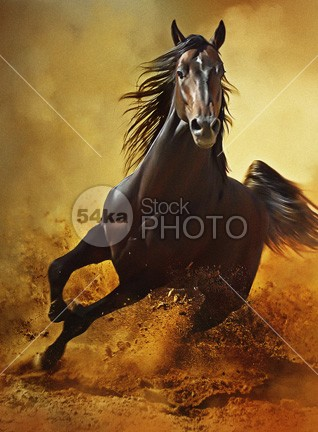 Galloping Horse at Sunset in Dust young yellow wild horse wild wall art sunshine sunset sunrise sun Success strong stallion speed Silhouette sand Runner run print power pferde painting paint orange nature moving Motion mane mammal light jump horse ground gallop freedom free forward force fast equine equestrian beauty equestrian emotions dust black stallion black beast artwork Art Arabian Horse arabian arab 54ka StockPhoto