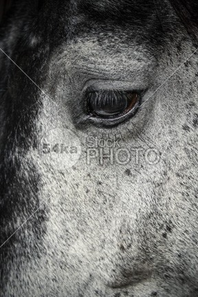 Beautiful white horse with closed eyes Art Photography Mammals lovely looking at looking look lights leisure horse horizontal head Harness ground green funny front friendly france forefront field ferus fence farm facing face eyes eye europe equus ferus caballus equus equine equestrianism equestrian beauty environment ears domestic contrasts colour colorful color clouds close-up close camargue caballus blurred blue behind background backdrop Art animals 54ka StockPhoto