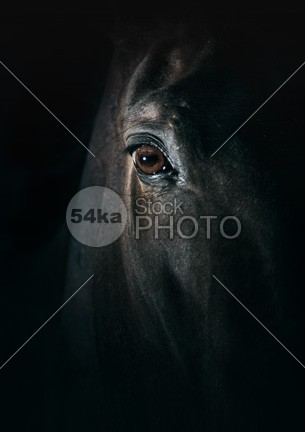 Black horse eye Beautiful close up rural pupil portrait pony photo outdoors nature mare mane mammal macro look light lashes iris horses horse head hair gloss gelding Friendship focus farm face eyes eyelashes eyeball eye equine equestrian beauty equestrian element domestic detail darkness dark cute color coat closeup close-up close brown breed black beautiful Art arabian animal eye animal 54ka StockPhoto