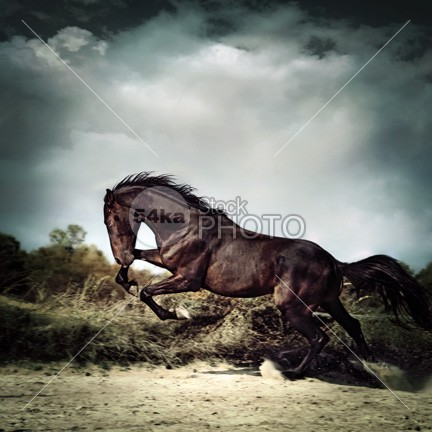 Beautiful black stallion horse running on the stormy sky power photo pets pet paddock outdoors outdoor one nice neck nature Motion mare mane mammal looking light horsepower horse horizontal gray grass grace Galloping gallop foal flying flight eye equine equestrian beauty equestrian energy ear domestic cute color cloud chestnut camera brown body blue black beautiful bay Art arabian arab animals animal action 54ka StockPhoto