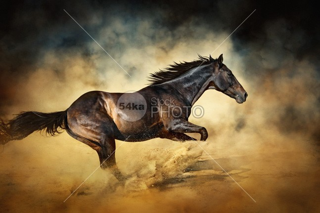 Black Stallion horse Galloping like a devil worm trot thunderstorm sunshine sunset sunrise summer strong stallion spirit speed sand Running Runner run racing power painting nero negro nature moving Motion mare mane mammal luster light horses horse ground Galloping gallop freedom free force fastest fast equine equestrian dust drawing domestic Desert color caballo black beauty beautiful beast Art animals animal andalusian 54ka StockPhoto