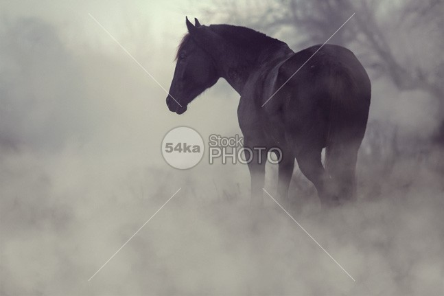 Black horse in the dark mist stallion spring sky september rural racehorse photo peaceful old october netherlands nature photography Morning mist meadow mane mammalian lonely livestock landscape horses horse holland groningen grassland grass Fog field farmland farm equine equestrian photo equestrian beauty early morning Dawn countryside cold air cold cloud breath blue Black Horse black beauty nature beauty beautiful autumn atmosphere animal photography animal alone 54ka StockPhoto
