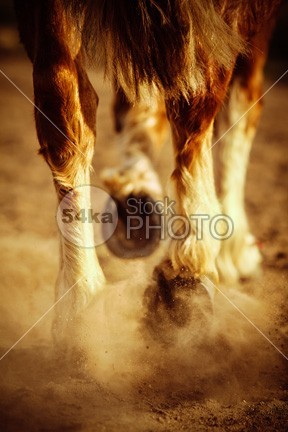 Horse Dust and Hooves Shoe sand Running Riding raising Powerful power pounding photo part near nature multiple move mighty many legs Leg large kicking horse hooves hooved hoofed hoof hair ground Galloping gallop foot field feet fast equine equestrian beauty equestrian energy endurance dusty dust draft dirt detail condition closeup close-up close backlit Art animal agile adrenaline 54ka StockPhoto