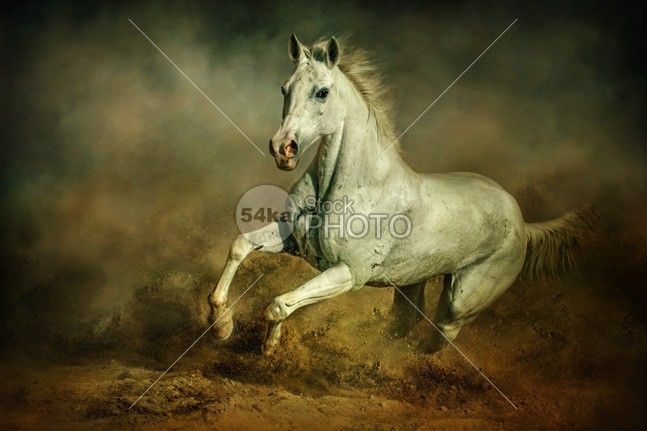 White horse Running wild Equestrian art photography white horse Pose photo performance pedigreed outside outdoor orange one nature moving Motion meadow mare mane mammal light horses horse horizontal hoofed high ground gallop freedom free force fast expressive expression expensive equine equestrian photo equestrian emotions elegant elegance dust body black beauty beautiful beast background artistic Art arabian arab animal andalusian active action 54ka StockPhoto