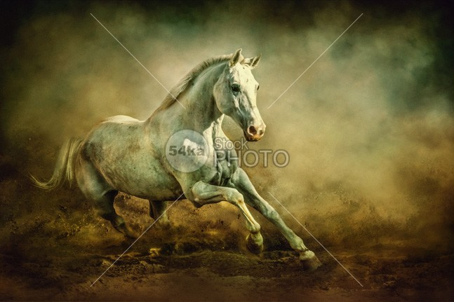 White Arabian Stallion Running In Dust photo moving Motion mare mane mammal Male light jumping jump isolated horses horse hoofed hill herd group ground grey gray graceful grace gallop freedom free forward force foal fight fastest fast equine equestrian beauty equestrian emotions dust Desert clouds chestnut card black beautiful beast bay background Art arabian arab animals animal Activity action 54ka StockPhoto