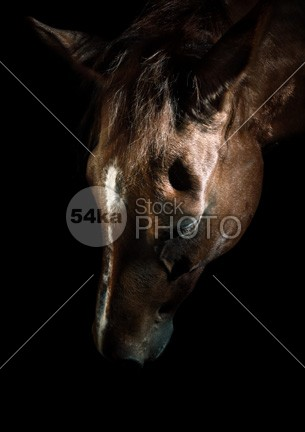 Bown horse portrait rural racing purebred portrait photo outside outdoors outdoor one nose nature Motion meadow mare mane mammal looks looking horses horse head hair gallop freedom field ferus farm face equus equine Equidae equestrian beauty equestrian domesticated details dark color closeup chestnut caballus brown breed blue black background black beauty beautiful bay background Art arabian animal 54ka StockPhoto