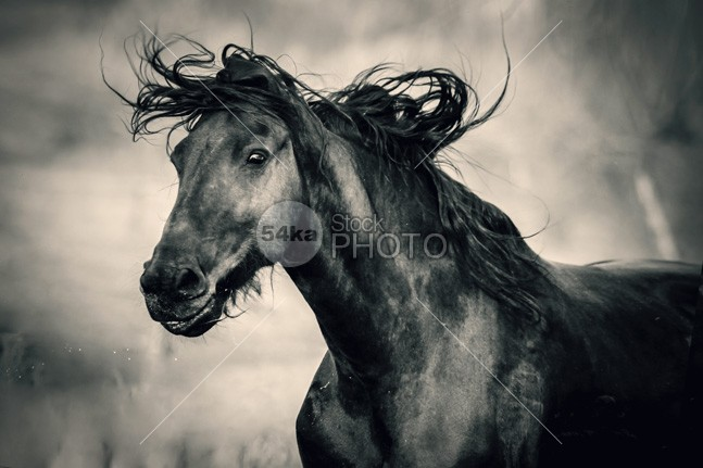 Really happy horse Equestrian emotions photo mane mammal low angle view Low Angle joy humorous humor horse portrait horse head horse head happy horse happy funny face eye expression equine equestrian photo equestrian beauty equestrian domestic day dark cute horse cute colt clouds closeup close-up close brown bright bridle Black Horse black and white horse photography black and white big beautiful bay background b&w Art animal portrait animal amazing alone 54ka StockPhoto