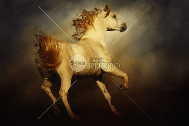 Majestic Horse Art Photography young wild white horse white texture stallion speed Runner run poster photoshop photomanipulation painting paint nature moving movement Motion mane light horses horse selection horse high gallop freedom free force fast equine equestrian beauty equestrian emotions dust domestic dark color collection classical classic brown beauty beautiful Art animal amazing horse 54ka StockPhoto