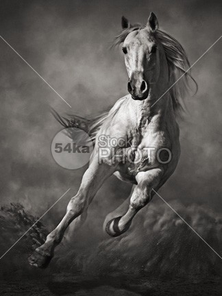 Galloping White Horse in Dust young yellow wild white wall sunshine sunset sunrise sun Success strong stallion speed silver Silhouette sand Runner run power poster painting orange nature moving Motion mane mammal light jump horses horse ground grey gray gallop freedom free forward force fast equine equestrian beauty equestrian emotions dust cloud black and white black beast Art arabian arab 54ka StockPhoto