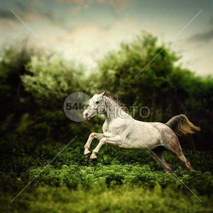 Beautiful white horse jump on the green forest background photo jump horsepower horse photography horse horizontal hooves head happy hair ground green gray grass galloping horse gallop fur funny fun friendly fresh freedom free forest flower field farmhouse farm eye event equine equestrian beauty equestrian enjoy energy domestic dandelion canter brown breed branch black beautiful white horse beautiful Art arabian arab animal andalusian amazing horse active action 54ka StockPhoto