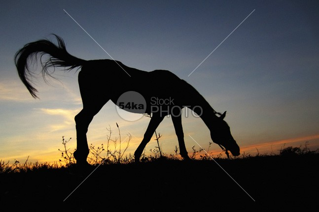 Sunset Horse wild wallpaper sunset sky sunset sunrise sunlight sun summer sky Silhouette shadow rural print poster photo pasture outdoors orange nature beauty nature mane Mammals mammal light landscape horses horse selection horse horizontal ground freedom free evening equine equestrian domestic dark colorful color brown black beauty beautiful background Art animal 54ka StockPhoto