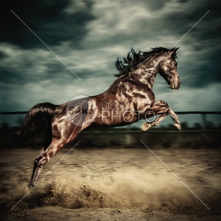 Beautiful wild stallion jumping in dust Equestrian photography on the stormy photo mammal Male light Lifestyle leap jumping horse jumping jumper jump isolated horseback horse hoofed hobby herd ground grooming grey gray gallop freedom free forward force foal filly fight field fence fastest fast farm equitation equine equestrian emotions dust dressage competition cloudy cloud champion bridle breed blue black beautiful beast bay Art animal 54ka StockPhoto