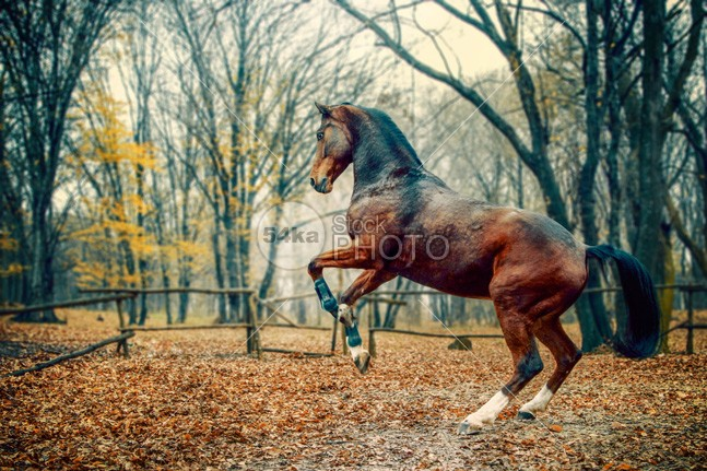 Brown horse in the forest young wood warmblood vertical thoroughbred summer strong stallion spring Running Runner run red purebred photo pet outside outdoor nature movement Motion meadow mare light horses horse green golden gelding Galloping freedom forest field equine equestrian beauty equestrian domestic day brown beautiful background Art animal 54ka StockPhoto