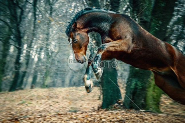 Wild horse jumping wildlife wild trot tree spacious rural Running run ride plant photo peaceful outside outdoors outdoor nature meadow jump Idyllic horses horse green gallop freedom free field farm equine equestrian beauty dusk dry dirt danger canter brush brown Art animals animal amazing equestrian amazing action 54ka StockPhoto